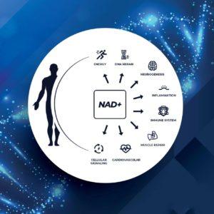 NAD点滴で期待できる効果の紹介